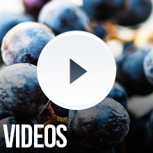 Videos on winemaking