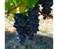 Brehm Fruit - Syrah - Plum Ridge Vineyards, Sonoma Valley AVA, CA 2018
