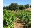 Brehm Fruit - Zinfandel - Dos Limones Vineyard, Sonoma Mountain AVA, CA 2019