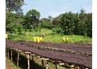 Ethiopia Sidama Hantate - Pulped Natural Process - Green Coffee Beans
