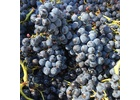 Brehm Fruit - Mourvedre - Landmark Vineyard, Sonoma Valley AVA, CA 2017