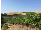 Brehm Fruit - Petite Sirah - Plum Ridge Vineyards, Sonoma Valley AVA, CA 2018