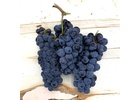 Sangiovese , Livermore Valley CA 2020 (Frozen Grapes, 6 Gallon Pail)