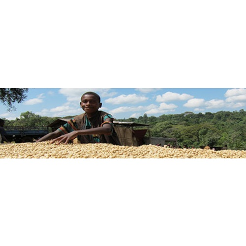 Ethiopia Sidamo - Natural Process - Green Coffee Beans