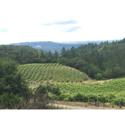 Brehm Fruit - Cabernet Sauvignon - Plum Ridge Vineyards, Sonoma Valley AVA, CA 2019